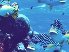 WWF - Rettet das Great Barrier Reef